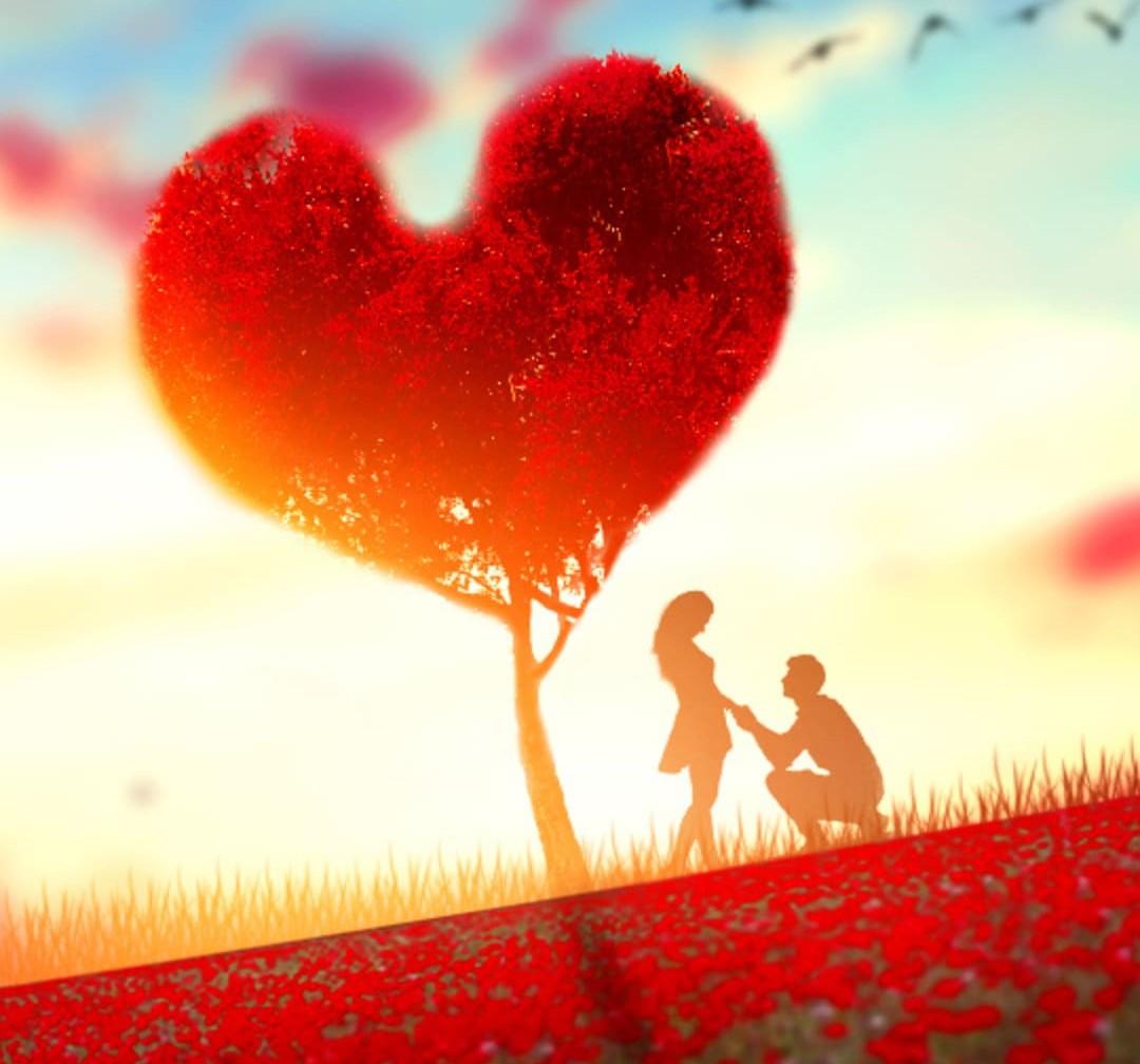 Love Dp Top Best Love Dp Pic Download