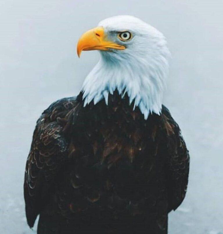 eagle profile picture