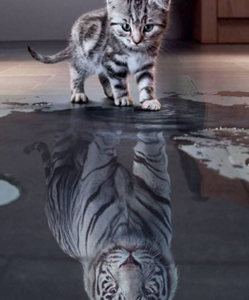 tiger profile dp