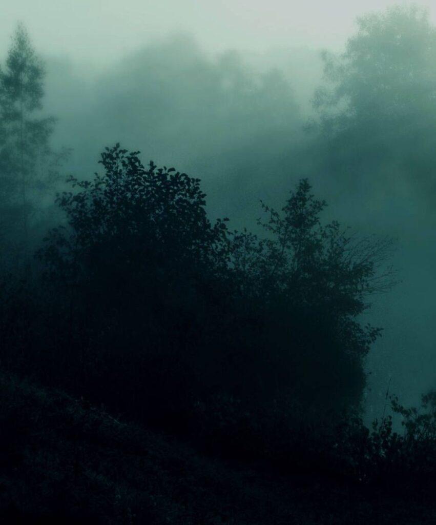 dark forest dp