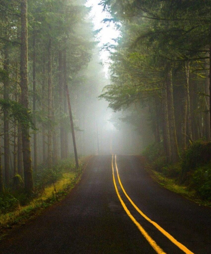dark forest pictures