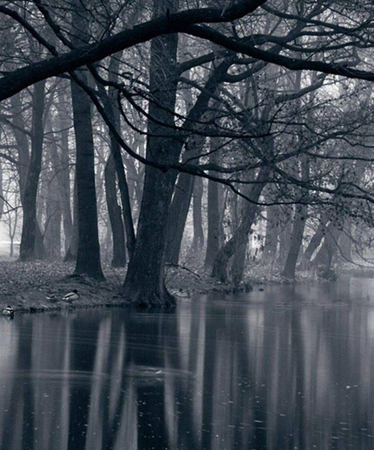 dark forest profile picture