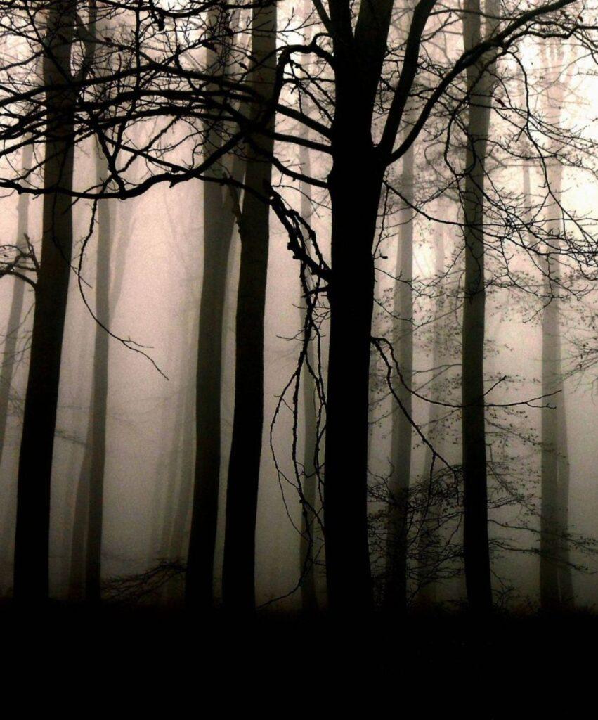 dark forest profile picture for discord