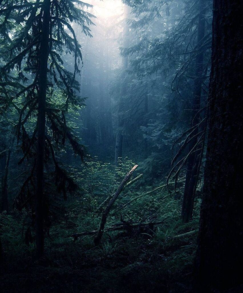 dark forest profile pictures