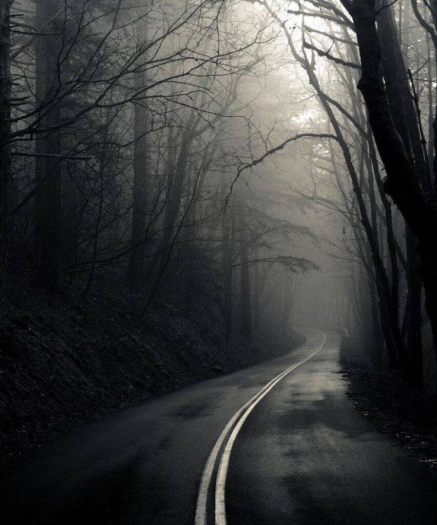 dark forest profile image