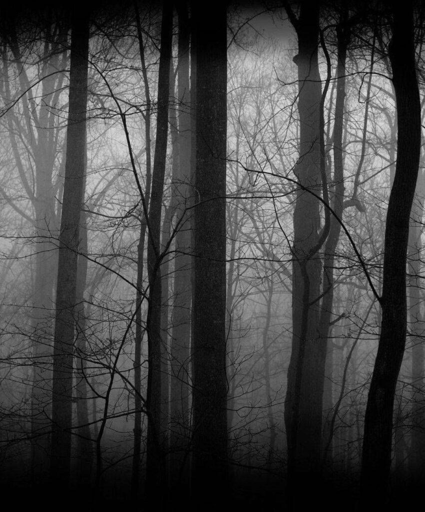 dark forest profile photo