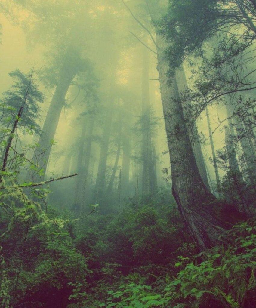 dark forest profile picture for tiktok