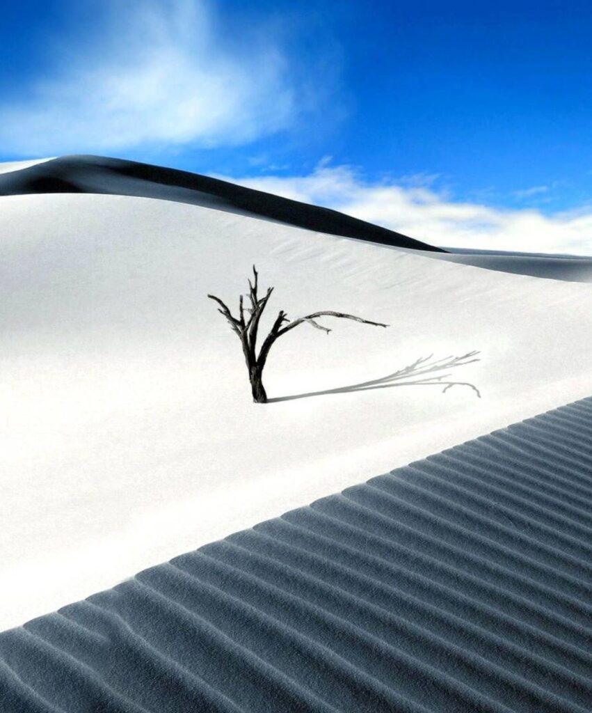 desert profile pic