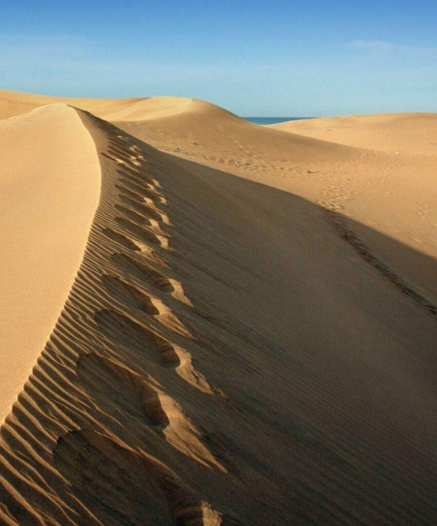 desert profile image