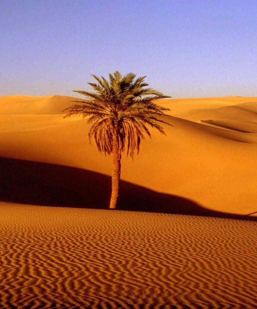 desert profile photo