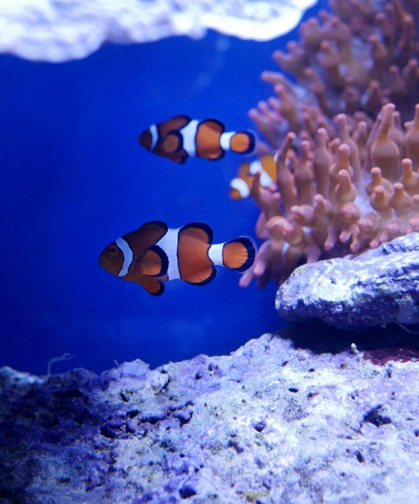 fish profile dp