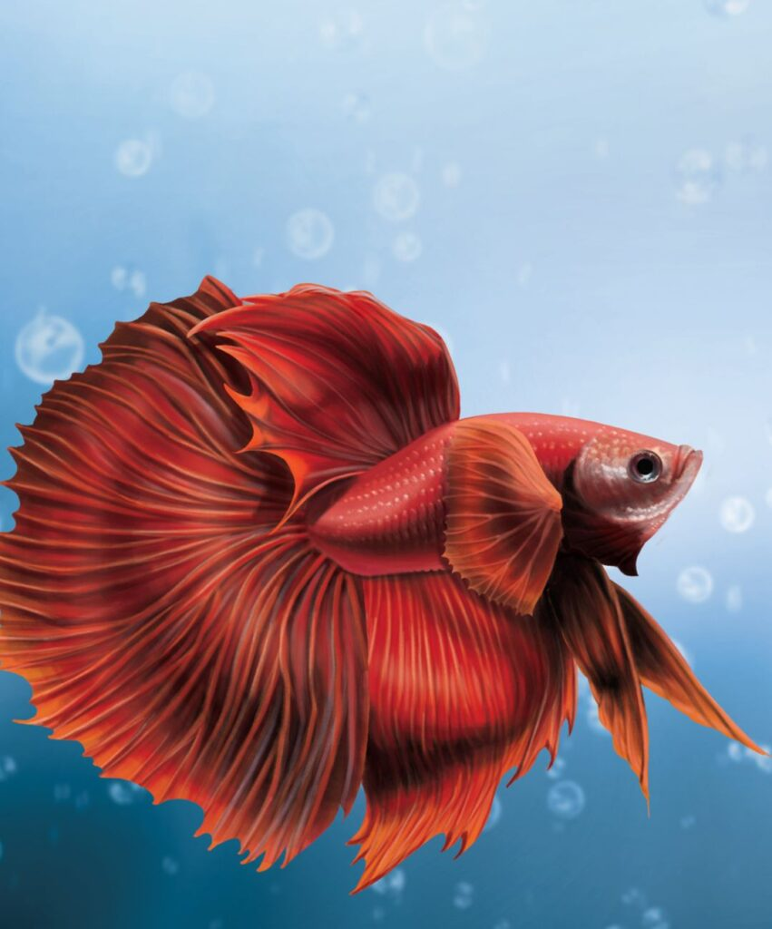 fish profile picture