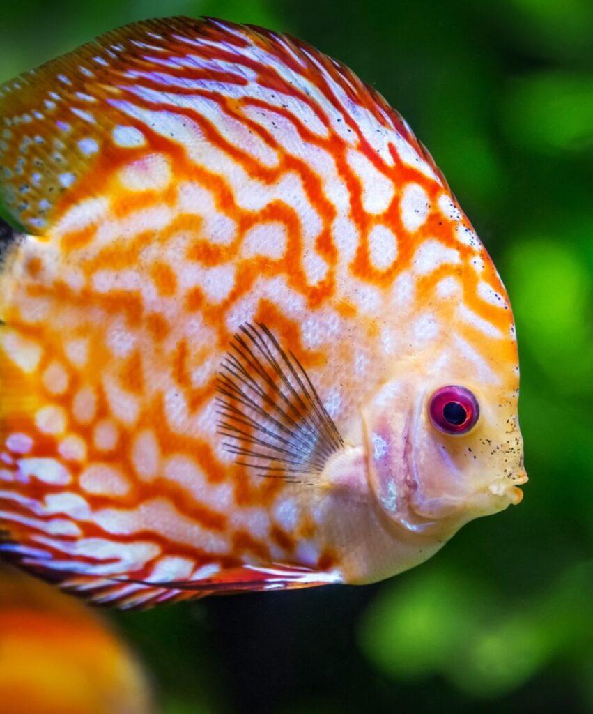 fish profile picture for discord