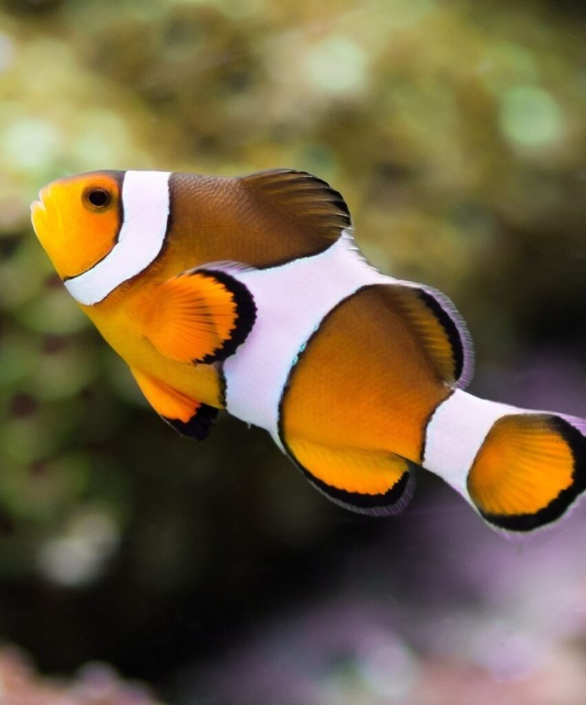fish profile pictures