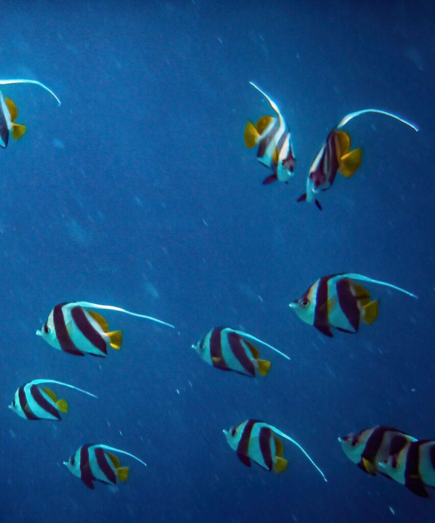 fish profile image