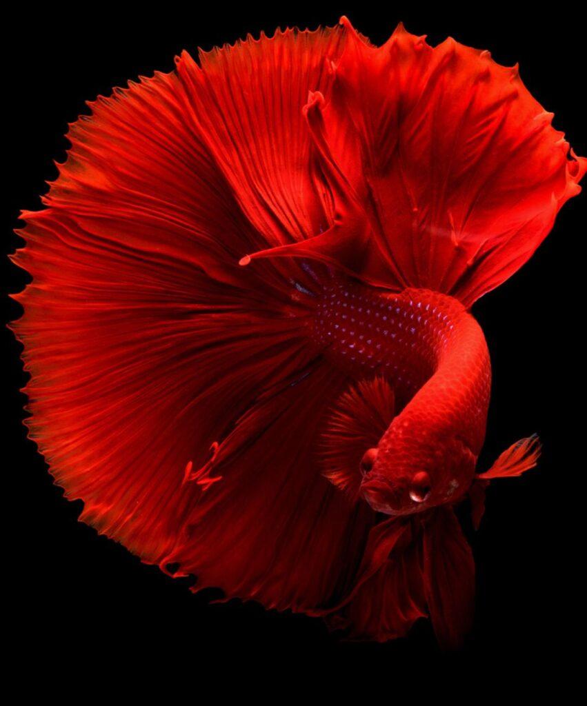 fish profile picture for instagram