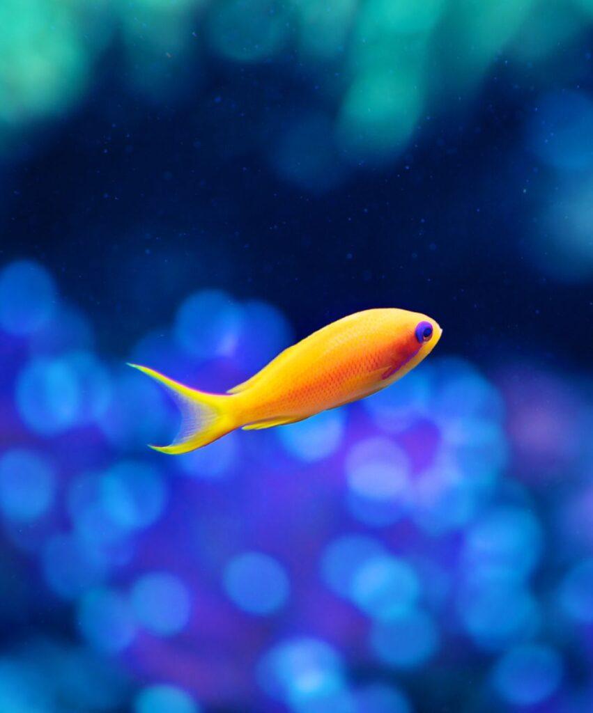 fish profile picture for tiktok