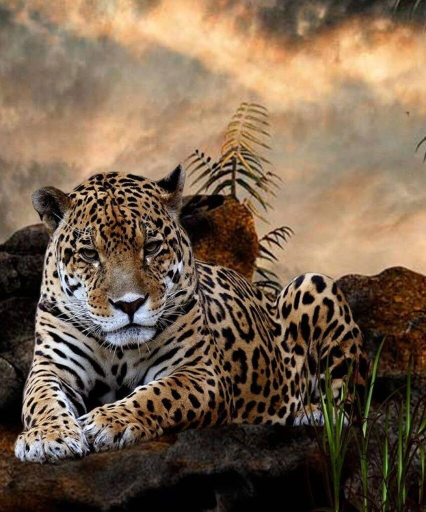 leopard profile pictures