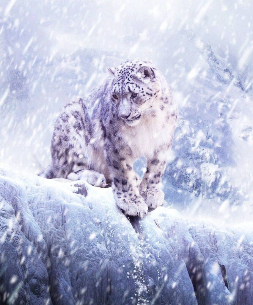leopard profile image