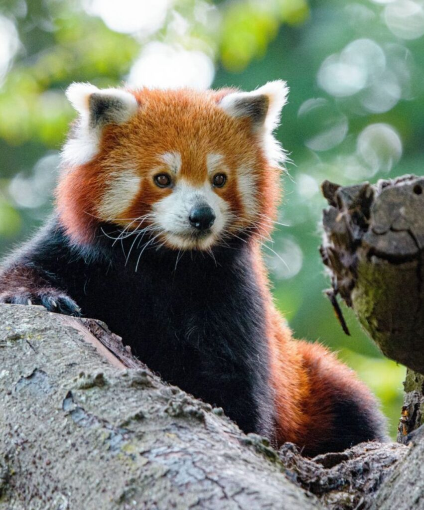 panda profile pic