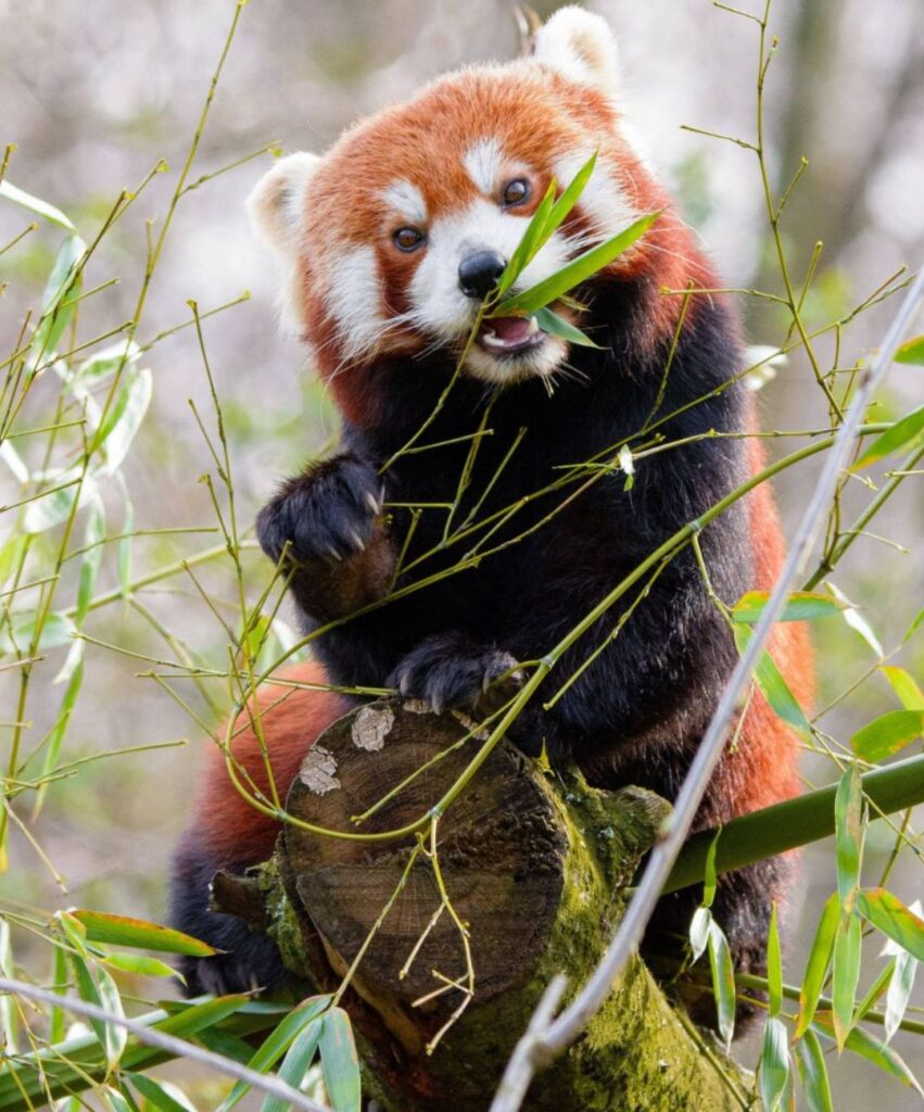panda profile image