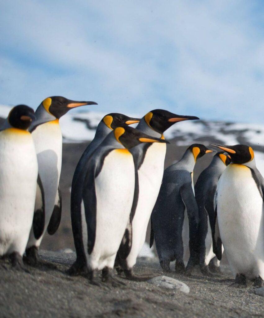 penguin dp