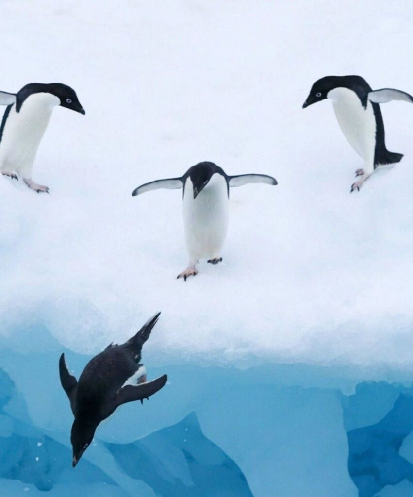 penguin profile dp
