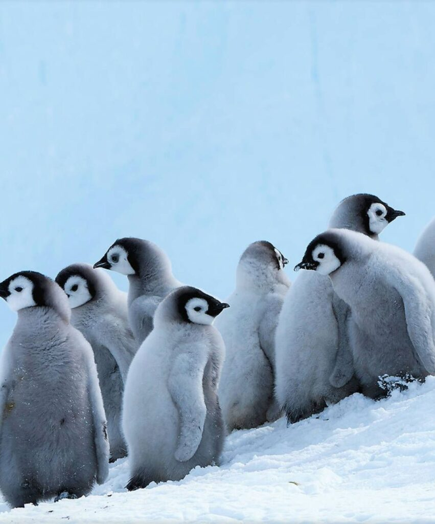 penguin profile pic