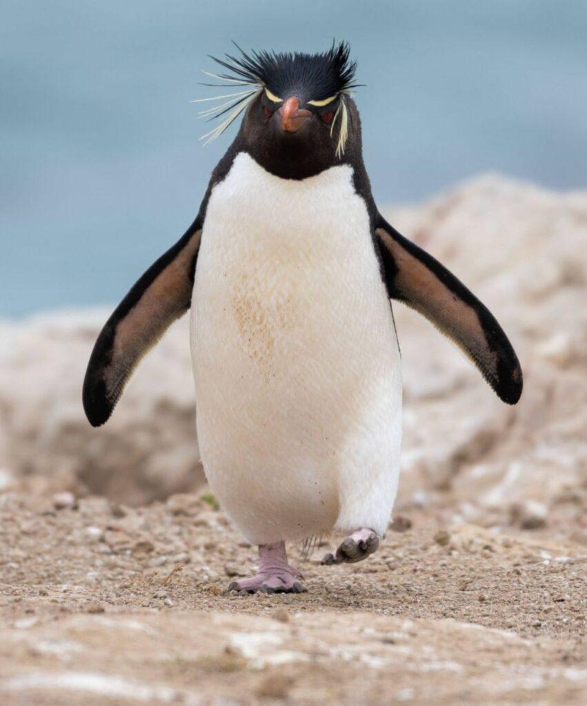penguin profile picture for discord