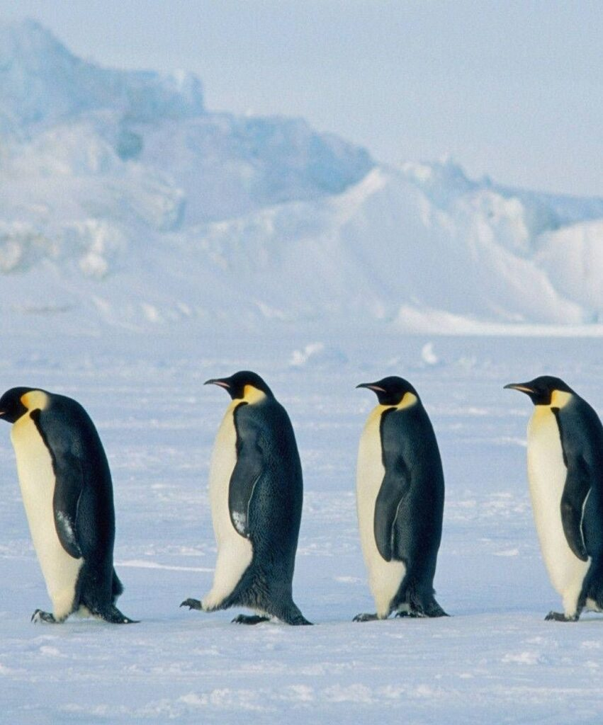 penguin profile pictures