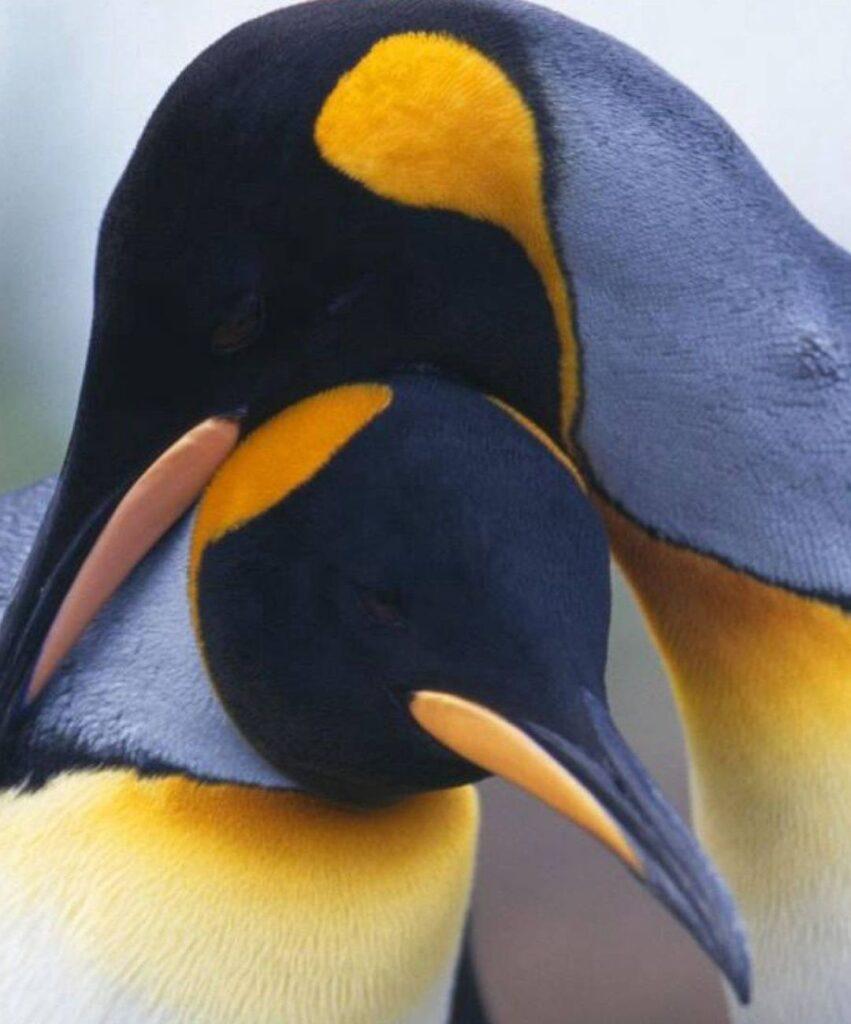 penguin profile photo
