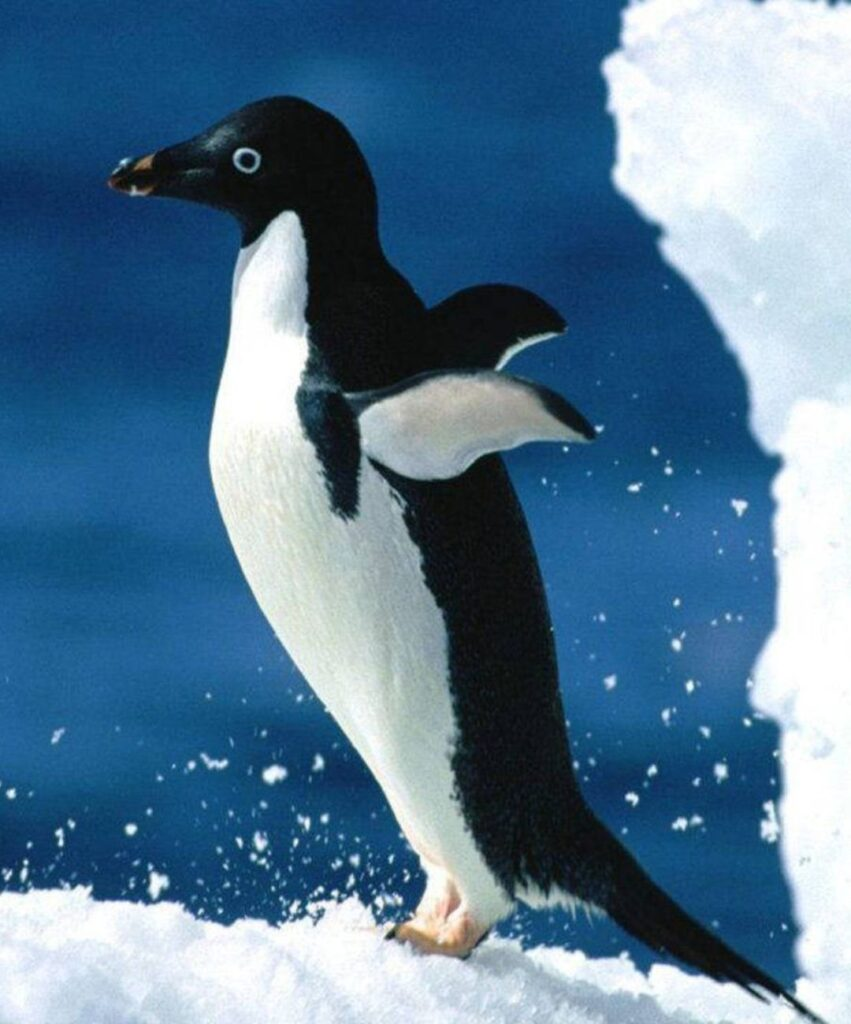 penguin profile picture for whatsaap