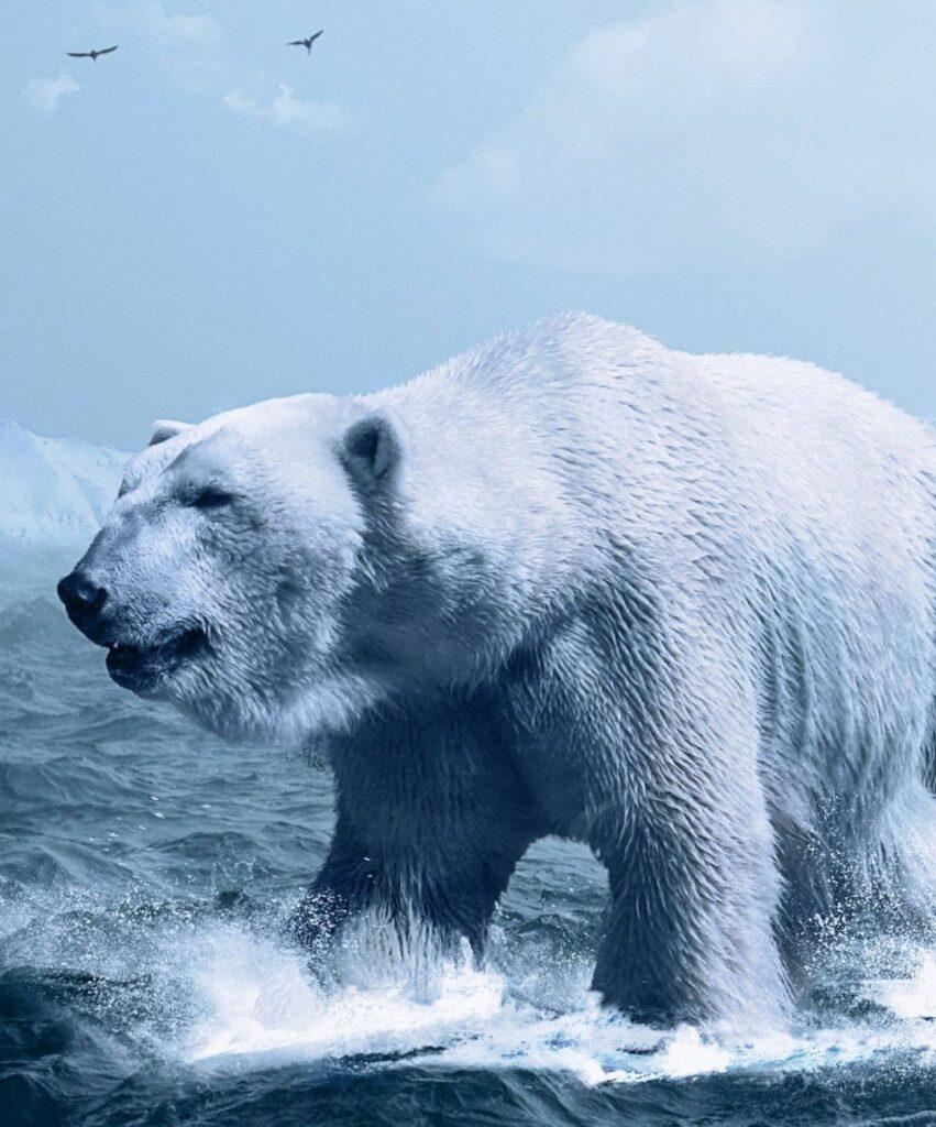 polar bear profile picture for instagram