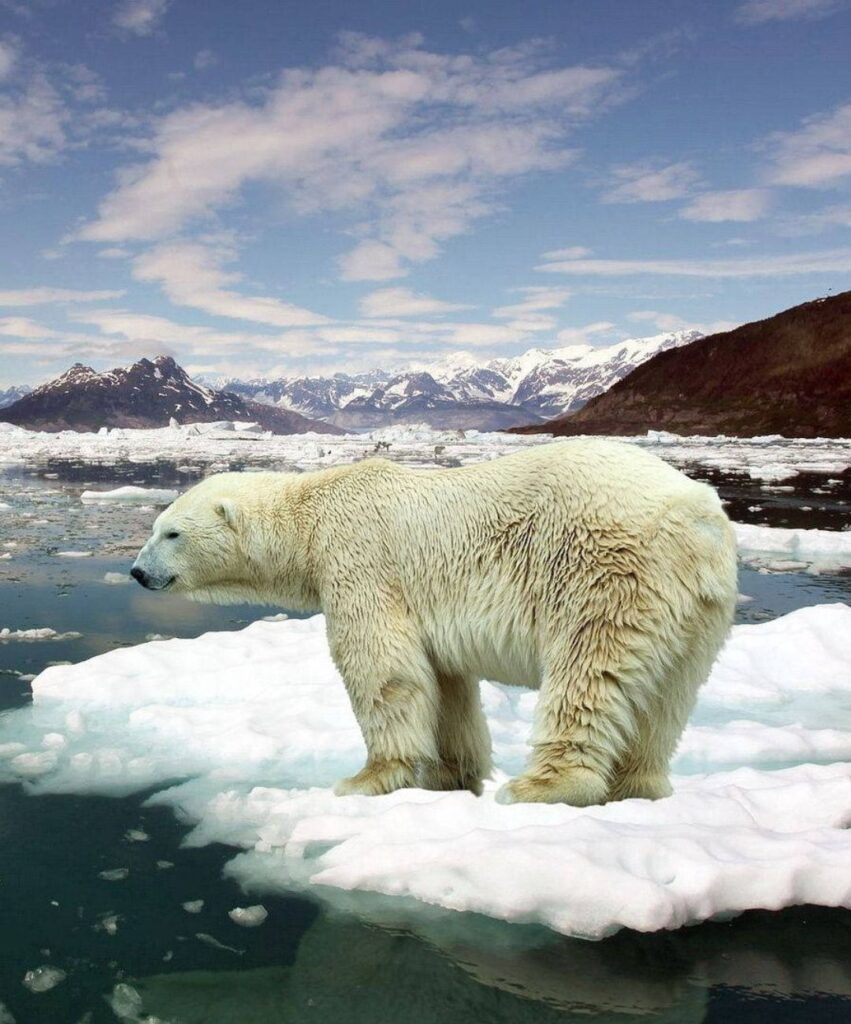 polar bear profile picture for tiktok